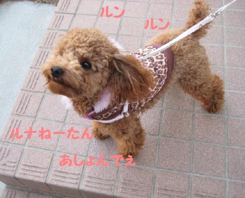 IMG_3541_1.jpg