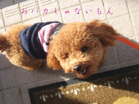 IMG_4040_1.jpg