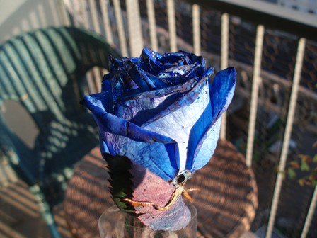 Rose de Blue