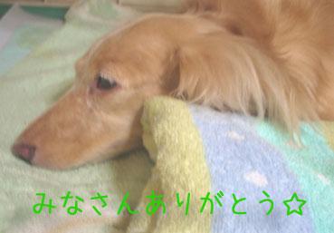 wanko02.jpg