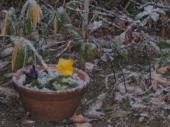 neige4937.jpg