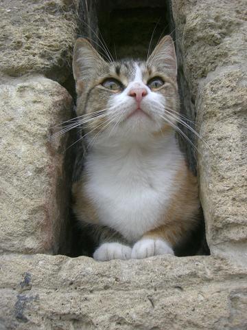 cat in baku