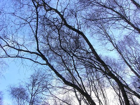 w#305;nter tree