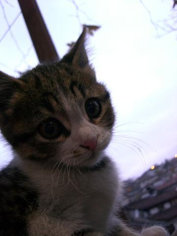 a cat 2