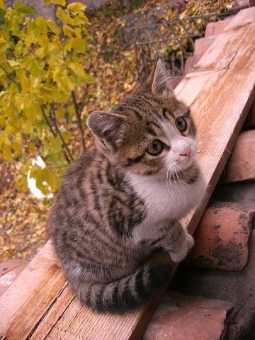 a cat in sb