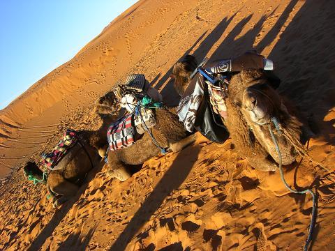 1 camel2
