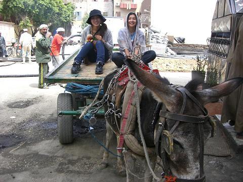 1 donkey riding