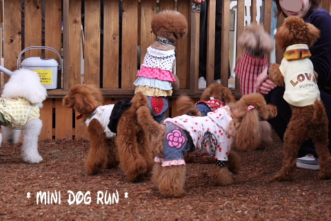 mini dog run