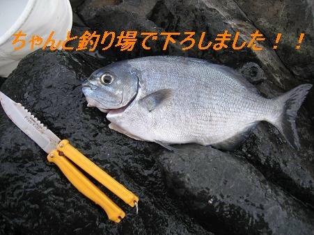 片島_20081223_3