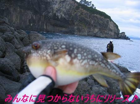 片島_20081223_6