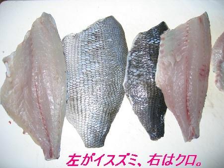 片島_20081223_8