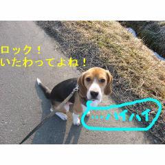 haihaiyo.jpg