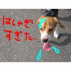 hasyagi.jpg