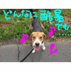 kokusyo.jpg