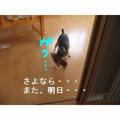 sayonara.jpg