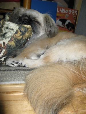 お気に入りの場所でお気に入りの枕で▽・w・▽