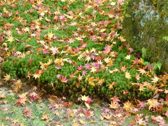 苔の上の紅葉もをかし