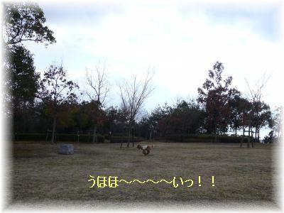 P1090112.jpg