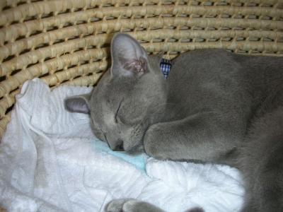 小太郎寝顔2