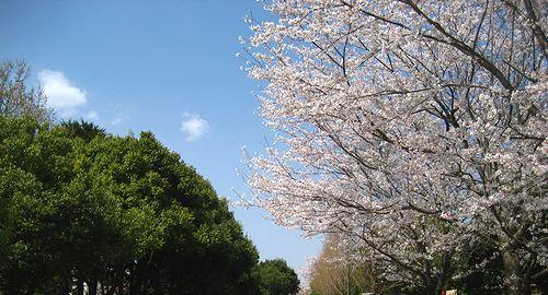 春ですねぃ