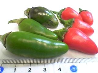 ハラペーニョ、収穫