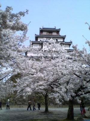 鶴ヶ城。天守閣と桜