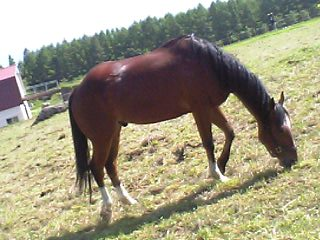 磐梯山牧場の馬