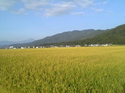 黄金色!稲のじゅうたん&ちらっと磐梯山
