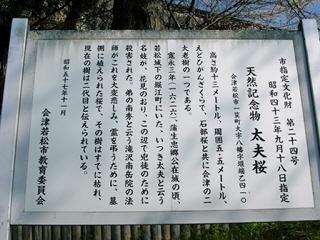 太夫桜@飯盛山