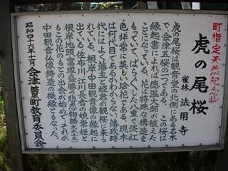 虎の尾桜@法用寺