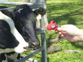 あかべぇと牛