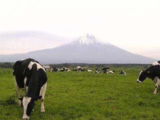朝霧高原の牧場から眺めた富士山