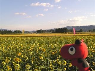 稲刈り中の田んぼ&ひまわり畑&あかべぇ@丸森町(舘矢間)
