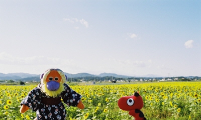 よし子とあかべぇ@丸森町(舘矢間)のひまわり畑