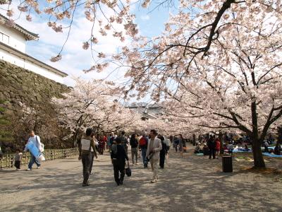 鶴ヶ城、桜満開