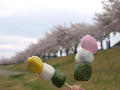 三色だんごでお花見♪@宮川の千本桜