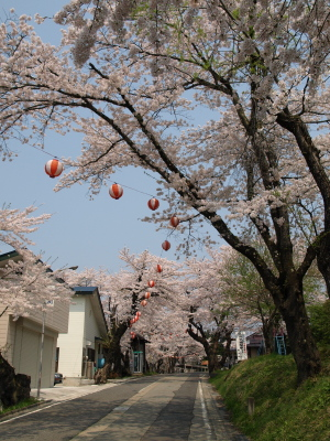 JR会津柳津駅前の桜