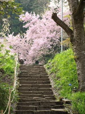 薬王寺の山門から薬師堂への道