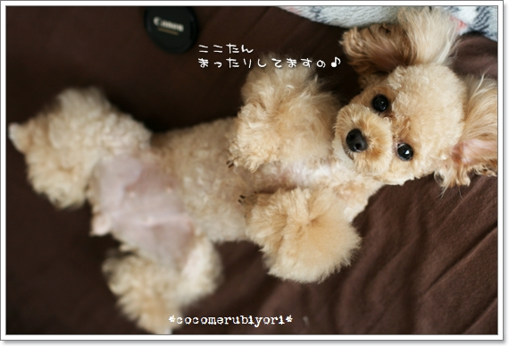 2008-09-COCONA-04.jpg