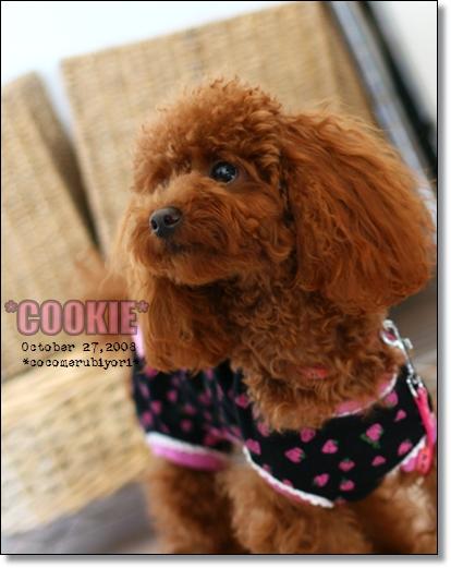 2008-10-27-cookie-2.jpg