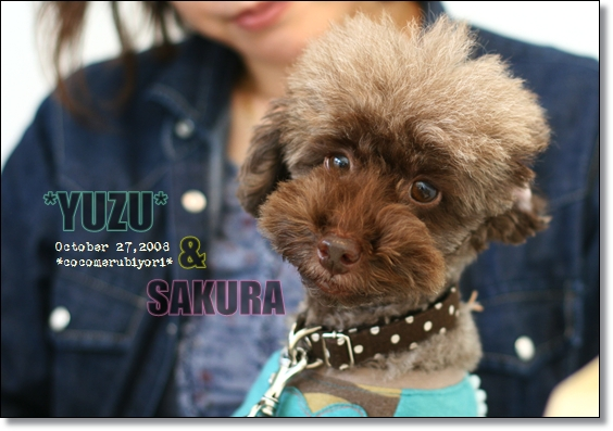 2008-10-27-yuzu-1.jpg