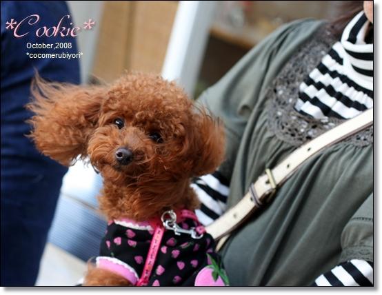 2008-10-Cookie,