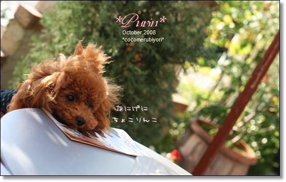 2008-10-Purin,