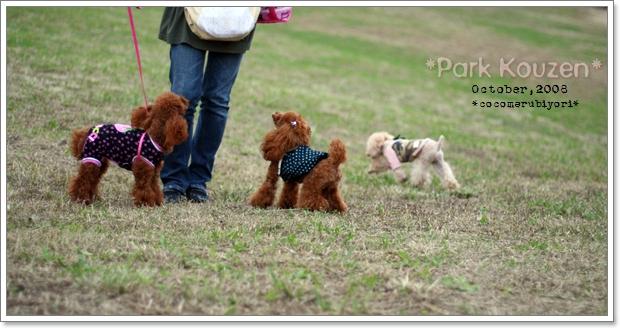 荒山公園-Purin Cookie