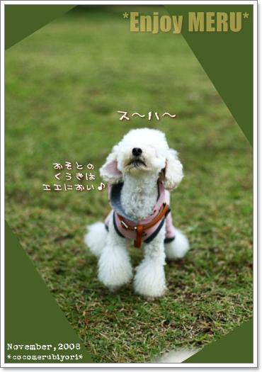 大芝生広場メル-01