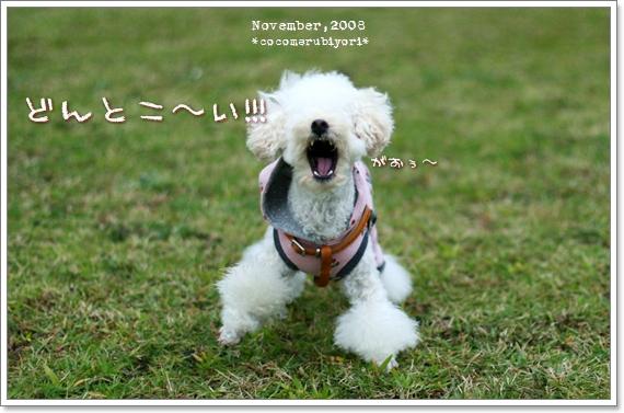 大芝生広場メル-03