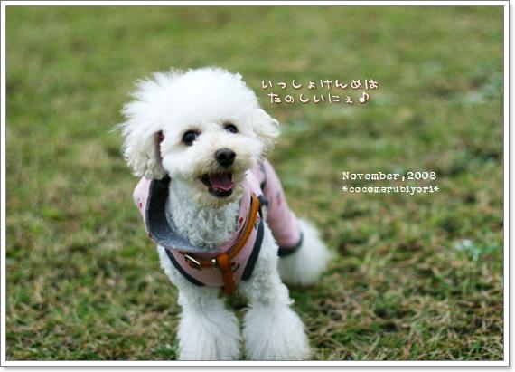 大芝生広場メル-05