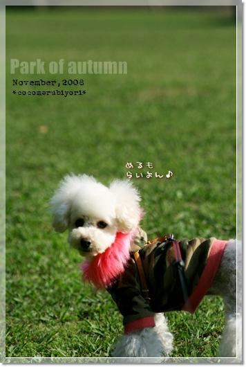 Park of autumn-メル0・