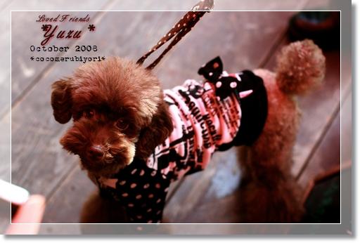 2008-10-Loved Friends-Yuzu