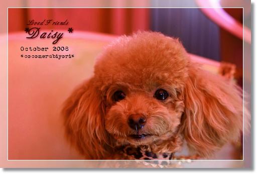 2008-10-Loved Friends-Daisy